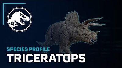 Species Profile - Triceratops