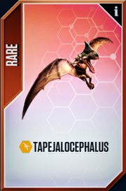 Tapejalocephalus Card