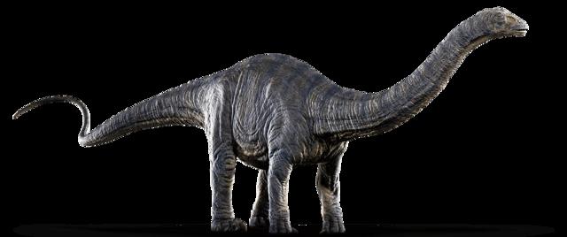 Apatosaurus (1)