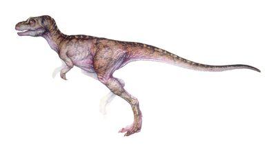 T-rex infant