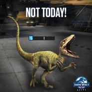 Velociraptor 1HP