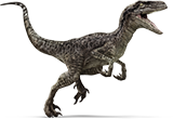 Raptor on