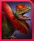 Diloranosaurus