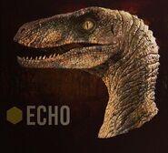Raptor squad Echo header icon