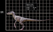Velociraptor male comparacion