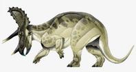 JPI Triceratops