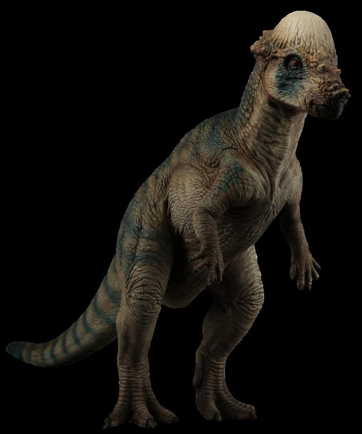 Wikia PachycephalosaurusJurassic Park Fandom By Powered Wiki vyn0PmNw8O