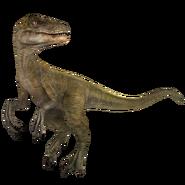 Velociraptor (1)