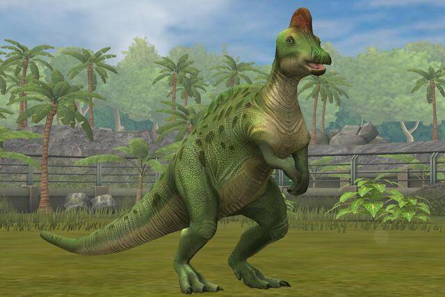 File:Corythosaurs Casuarius (71).jpg