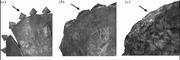 Triceratops epoccipitals