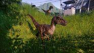 Jwe screenshot raptor 1993 02 0