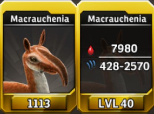 Macrauchenia Level 40 Tournament-Battle Arena Profile Picture