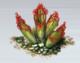 Carnivorous Plants (Glacier)