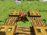 Woolly-stalked Begonia