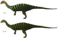 Concept - Mussaurus