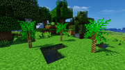 JC screenshot - Scaly Tree Fern