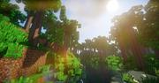 Phoenix forest
