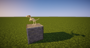 Skeleton - Microraptor