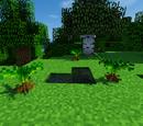 Small Cycad