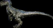RaptorBlue