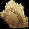 AAquaticplantfossils
