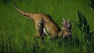 Dracorexwarbear