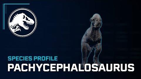 Species Profile - Pachycephalosaurus