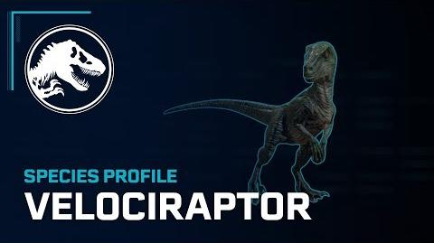 Species Profile - Velociraptor