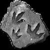 DDinofootprints
