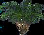Treefernsthumb