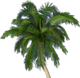 Palmsthumb