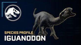 Species Profile - Iguanodon