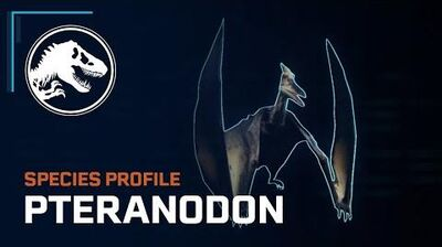 Species Profile - Pteranodon
