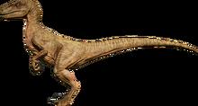 RaptorArid