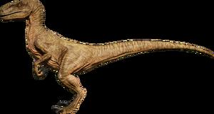 Raptor Arid