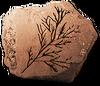 CConiferfossils