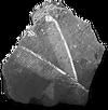 CChordatefossils