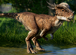 JWEStygimoloch