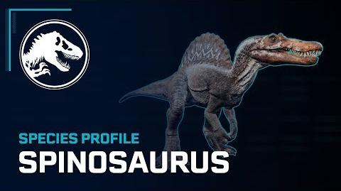Species Profile - Spinosaurus