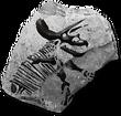 Ceratopsidfossilicon