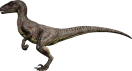 RaptorVivid