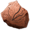 AAlgalfossils