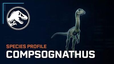 Species Profile - Compsognathus
