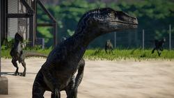 RaptorSquad