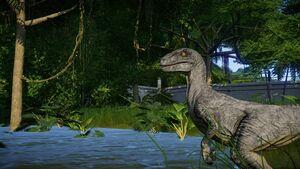 Raptor2Steve