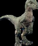Raptorthumb