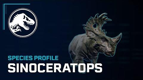 Species Profile - Sinoceratops