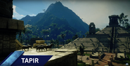 JC4 tapirs at an ancient temple