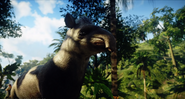 JC4 new animal