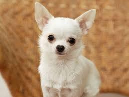 File:Its a dog not a cat.jpg